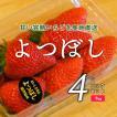 いちご よつぼし 4パックセット 1kg (ナチュラ日野)