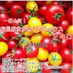 ミニトマト トマト 当店一番人気!新鮮 生産者直送 数種類のトマトが入った店長おまかせバラミックス2キロ