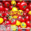 トマト ミニトマト 新鮮 生産者直送 当店一番人気!数種類のミニトマトが入った店長おまかせバラミックス3キロ