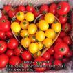 トマト ミニトマト 生産者直送 店長おまかせバラミックス『ハート』でお届け 2キロ 1日3箱限定