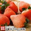 桃のような新品種の苺「桃薫」化粧箱入 約350g(9〜15粒)苺の花ことば/のし無料/送料無料