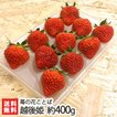 新潟ブランド苺「越後姫」2パック(約400g/18〜22粒)苺の花ことば/のし無料/送料無料