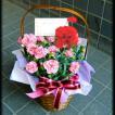 母の日 プレゼント  ギフト  カーネーションバスケット ピンク 5号鉢