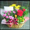 お祝い 開店祝い プレゼント 花 人気ランキング上位 おまかせプランツバスケット1 花 プレゼントなどに 条件付き送料無料 母の日