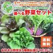 北海道からお届け!無農薬栽培の選べる野菜セット 5種類 送料無料/お好きな野菜を5種類お選びください。