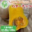 北海道産 バターナッツ 1玉(約1.3kg〜1.5kg)/ひょうたんのようなかわいい形のかぼちゃ