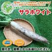 北海道産 新品種 大根「サラホワイト」1本(長さ:約40cm、太さ:約8cm前後)/たくあん臭も少なく黄変も少ない新品種です。