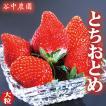 母の日 ギフト プレゼント とちおとめ プレミアム 約290g×4Pac  送料無料 いちご イチゴ 苺 栃木産 ストロベリー 高級 フルーツ 果物 内祝い 誕生日