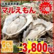【送料無料】厚岸町からプリップリの牡蠣をお届け!北海道厚岸産殻付牡蠣(マルえもん) / Lサイズ / 10個入