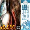 朝獲れ 鮮魚 セット 青森 尾駮漁港 6000円 贈り物 お歳暮 魚詰合せ 送料無料