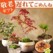 敬老の日 プレゼント ギフト 花 敬老の日ギフト 盆栽 和菓子セット