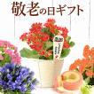 母の日ギフト 早割 花 母の日 プレゼント カーネーション 花鉢 花とスイーツ 2020 ギフトランキング 鉢植え お菓子 メッセージ