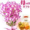 母の日ギフト2017プレゼント胡蝶蘭花女性母お菓子スイーツ