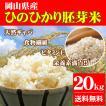 新米 お米 20kg ひのひかり胚芽米 令和元年岡山県産 (5kg×4袋) 送料無料