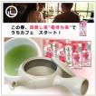 【お茶と急須のセット】 春待ち茶と常滑焼アイボリー急須セット
