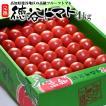 徳谷トマト(4kg)高知産 フルーツトマト 塩トマト 送料無料