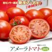 アメーラトマト(約900g)静岡産 フルーツトマト 高糖度 送料無料