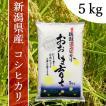 産地直送 新潟県産 平成30年産 おおしま育ち コシヒカリ 5kg 白米