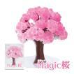 マジック桜 Magic桜 お祝い プレゼント エア花見 記念