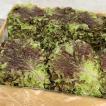 『食材』サンチュ(約100枚)■日本産 野菜 サムギョプサル 韓国料理