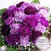 ムーンダストの花束(M) 24本の花束 誕生日プレゼント 古稀祝い お祝い 花束 珍しい花 青い花 紫のカーネーション もらって嬉しいギフト