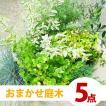庭づくり おまかせ5点セット 季節...
