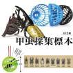 甲虫採集標本 全12種 セット カブトムシ カブト クワガタムシ クワガタ 昆虫 標本 フィギュア