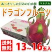 【送料無料】ベトナム産 ドラゴンフルーツ 白肉種 13玉〜16玉入り(1箱)