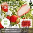 完熟いちご章姫(あきひめ赤色)1パック12粒入(約280g)×2パック【明和町・東農園直送】
