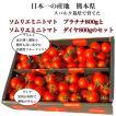 トマト 送料無料 九州 熊本産 ソムリエトマトとミニトマトのセット もぎたてを順次発送 6月20日まで
