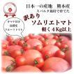 九州 熊本産 ソムリエトマト  訳あり 1.5kg(6玉〜16玉) もぎたてを順次発送