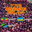 コーヒー豆 初回限定 お試し 送料無料 100gx3種類 アフリカ 個性派 珈琲豆