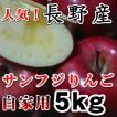 サンふじりんご 送料無料5kgご家庭用 信州産 長野サンふじりんご