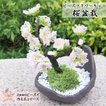 ビーズキット ビーズフラワー 桜の盆栽キット ビーズが咲いたよ