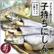 子持ち にしん  (特大サイズ×3尾セット)/ 焼き魚 おかず セット 酒の肴 数の子