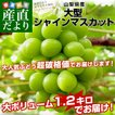 送料無料 山梨県より産地直送 JAふえふき シャインマス...