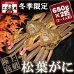 活きている松葉がに(松葉蟹)650g×2匹(2〜4人前) タグ付《送料無料》
