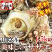 バーベキューでサザエの壺焼き山陰産 サザエ1.5kg(10〜15個)RCP