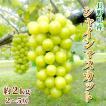 シャインマスカット 2kg(3〜4房) 長野県産 種なしぶどう 皮ごと食べられる:c18
