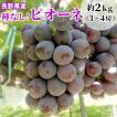 ぶどう ピオーネ 2kg(4〜5房) 長野県産 種なし 産地直送:c19
