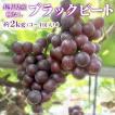 ぶどう ブラックビート 2kg(4〜5房) 長野県産 種なし 産地直送:c20