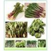 山菜 5種詰合せセット