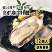 牡蠣 殻付き 生食用 12個 セット