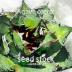アガベの種子オテロイ入荷