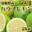 【訳あり】愛媛県産 ハウスレモン 約2kg【ワックス・防腐剤不使用】