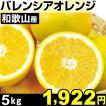 みかん 和歌山産 バレンシアオレンジ 5kg 1箱 食品
