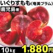 スモモ 鹿児島産 いぐり(奄美プラム)10kg 1組 冷蔵
