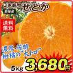 みかん 愛媛産 ご家庭用 せとか 5kg 柑橘 食品 国華園
