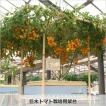 【別途送料がかかります】巨木トマト栽培用架台 水耕栽培で本格的に栽培したい方へ