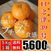 【送料無料】口之津39号(5kg×1箱)
